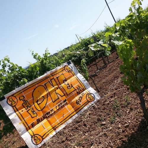 TheONE @the Tuscany Vineyards